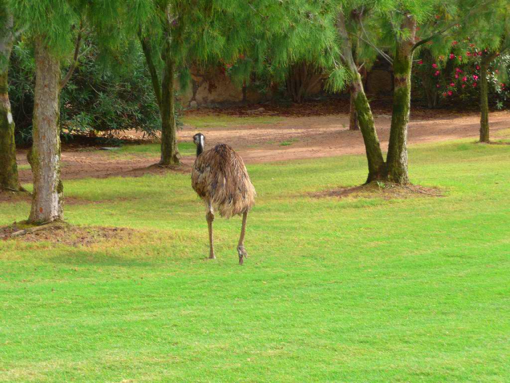 Emu Alarm :)